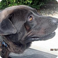 Adopt A Pet :: Hertz - Germantown, MD