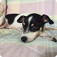 Adopt A Pet :: Little Girl - Clayton, CA