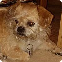 Adopt A Pet :: KK - Naples, FL