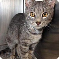 Adopt A Pet :: Salem - East Brunswick, NJ