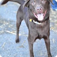 Adopt A Pet :: Osbourne - Salt Lake City, UT