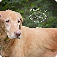 Vizsla Dog for adoption in Fort Valley, Georgia - Santana
