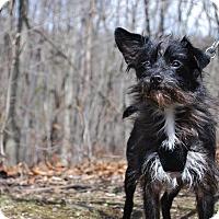 Adopt A Pet :: Dugan - New Castle, PA