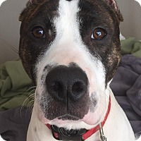 Adopt A Pet :: Bama - Lawrenceville, GA