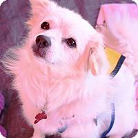 Adopt A Pet :: Jeff - Oakley, CA