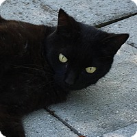 Adopt A Pet :: Shadow - Wilmington, NC