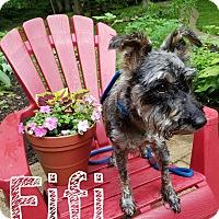 Adopt A Pet :: Fifi - New Oxford, PA