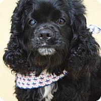 Adopt A Pet :: Gus - Dublin, CA