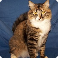Adopt A Pet :: Gloria - Colorado Springs, CO