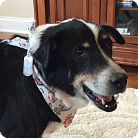 Border Collie Mix Dog for adoption in Hope Mills, North Carolina - Teddy - Adoption Pending - Congrats Carrie!