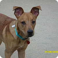 Adopt A Pet :: rico - mooresville, IN
