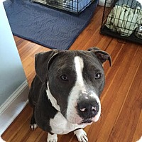 Adopt A Pet :: Ace - Franklinville, NJ