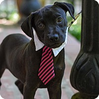 Adopt A Pet :: Owen - Baton Rouge, LA