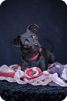 Dachshund/Terrier (Unknown Type, Medium) Mix Dog for adoption in SAN PEDRO, California - Betty