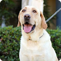 Adopt A Pet :: Santos - San Diego, CA