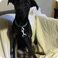 Adopt A Pet :: Rhett - Olympia, WA