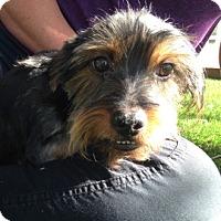 Adopt A Pet :: Johan - Temecula, CA