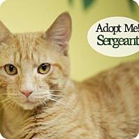 Adopt A Pet :: Sergeant - West Des Moines, IA