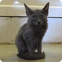 Adopt A Pet :: Bernie - Jackson, MO