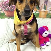 Adopt A Pet :: BRISTER - Fort Pierce, FL