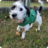 Adopt A Pet :: Holly - Florence, KY