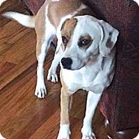 Adopt A Pet :: Daisy - Manhasset, NY