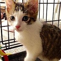 Adopt A Pet :: Ben - River Edge, NJ