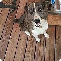 Adopt A Pet :: JT - Chilhowie, VA