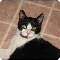 Adopt A Pet :: Paulie - San Jose, CA