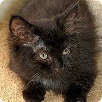 Adopt A Pet :: CeCe - Victor, NY
