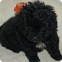 Adopt A Pet :: Lola - Hazard, KY