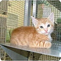 Adopt A Pet :: Karson - Winter Haven, FL