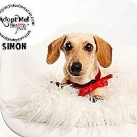 Adopt A Pet :: Simon - Omaha, NE