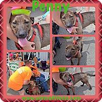 Adopt A Pet :: Penny - sanford, NC