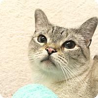 Adopt A Pet :: Indigo - Foothill Ranch, CA