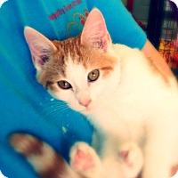 Adopt A Pet :: Poseidon - Green Bay, WI