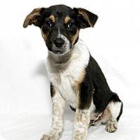 Adopt A Pet :: Buster - Lufkin, TX