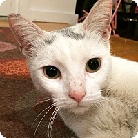 Adopt A Pet :: Snowflake - Brooklyn, NY