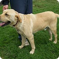 Adopt A Pet :: Midas - Lancaster, OH