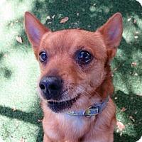Adopt A Pet :: Roscoe - Surrey, BC