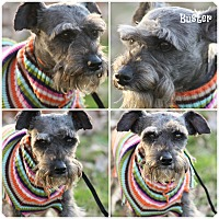 Adopt A Pet :: Buster - Brattleboro, VT