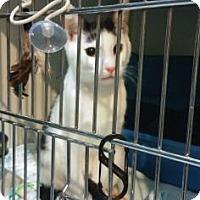 Adopt A Pet :: Nobu - New York, NY