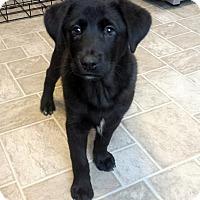 Adopt A Pet :: Friedrich - Dayton, OH