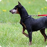 Adopt A Pet :: Raleigh - Queenstown, MD