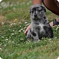 Adopt A Pet :: Steinbeck - Groton, MA
