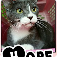 Adopt A Pet :: Hope - Edwards AFB, CA