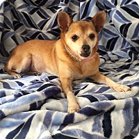 Adopt A Pet :: Tory *Courtesy Listing* - Los Angeles, CA