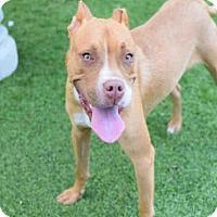 Adopt A Pet :: JANEE MAY - Atlanta, GA