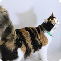 Adopt A Pet :: Rayne - Murfreesboro, NC
