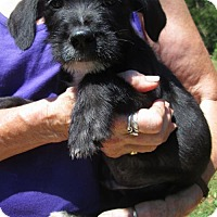 Adopt A Pet :: MICK - Lincolndale, NY